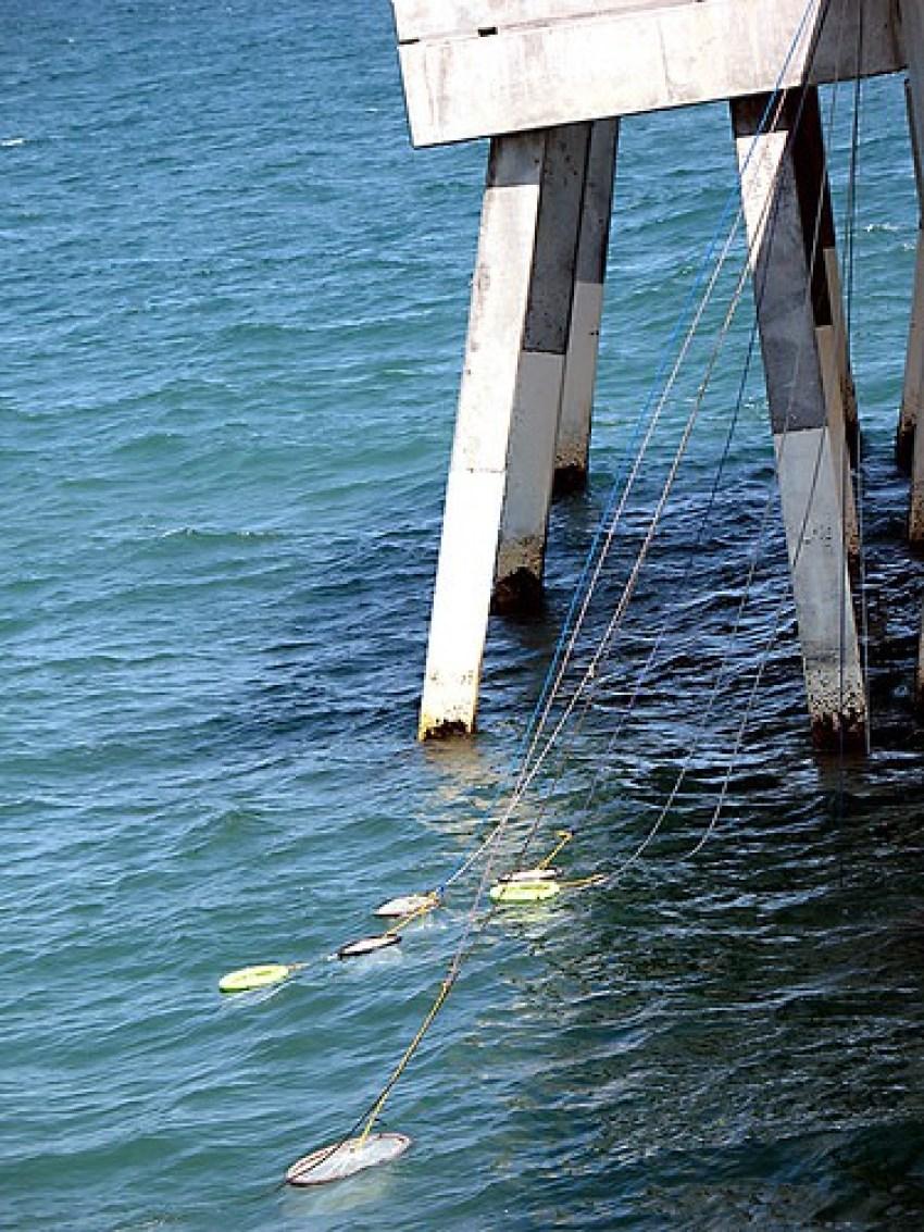 Wilmington nets
