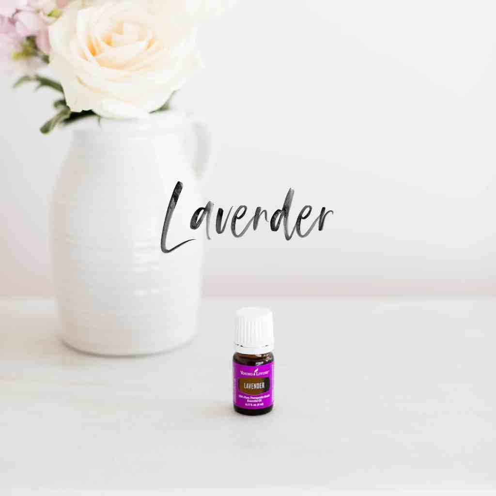 Lavender | The Epic Guide to Essential Oils: Everything You Need to Know | Just Jes Lyn