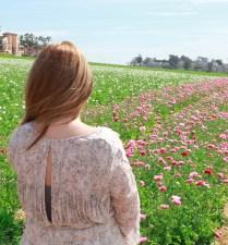 Flower fields19 (1 of 1)