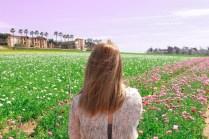 Flower fields20 (1 of 1)