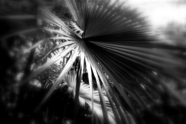 leaf 3 bandw