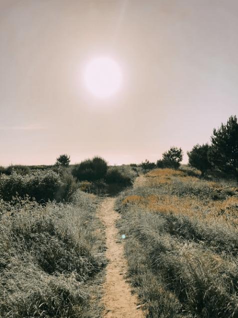 Screen Shot 2019-06-08 at 6.41.10 PM