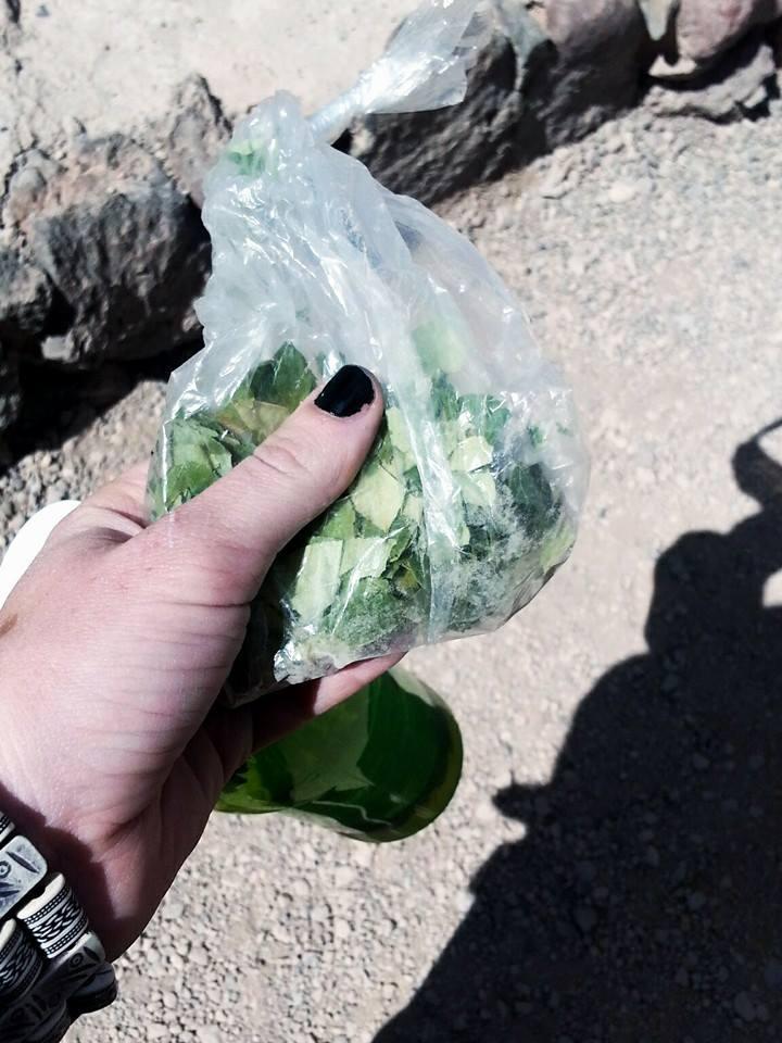Coca Leaves | Visit Atacama Desert: The Perfect 4 Day San Pedro de Atacama Itinerary