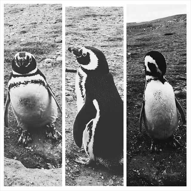 Penguins, Patagonia and Proposals!