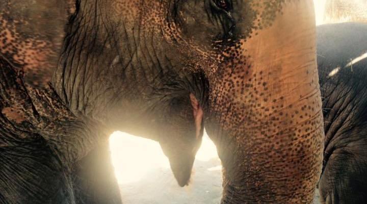Gentle Giants: Why You Should Visit an Elephant Sanctuary