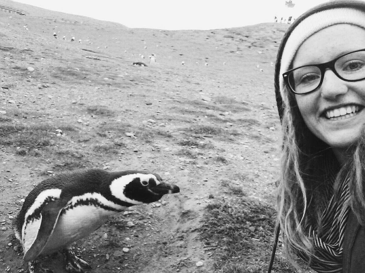 Penguins in Magdalena Island