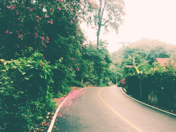 Deserted Jungle Roads in Chiang Dao