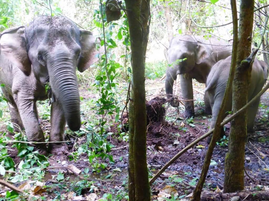 Sustainable Animal Encounters