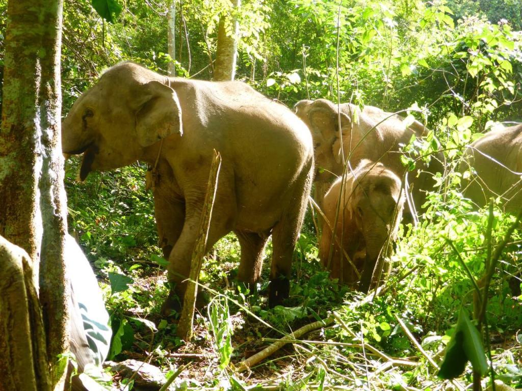 Elephants walking in a forest