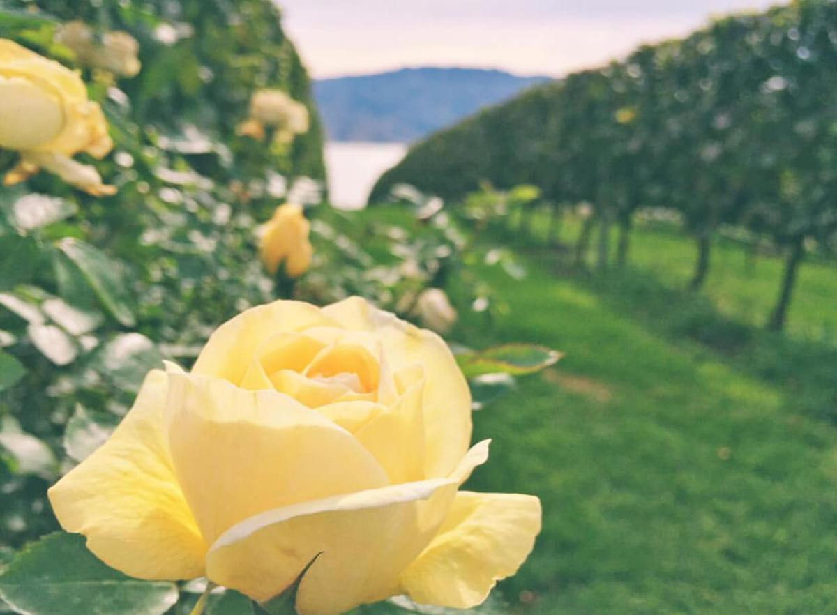 Gift Experiences | Wine Tours | Mission Hill