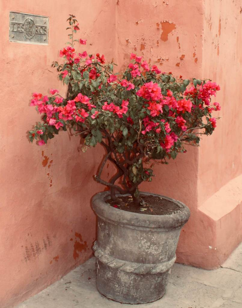 Guanajuato and San Miguel de Allende | Guanajuato Travel
