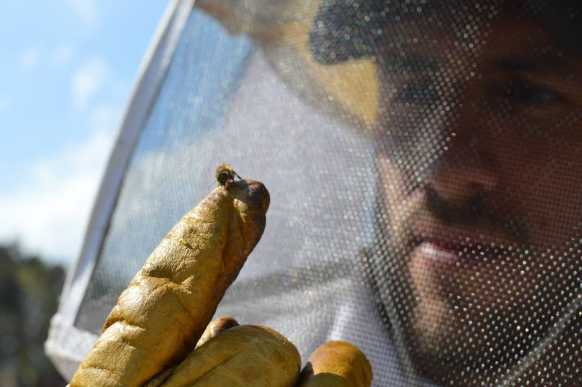 Beekeeping Experience   Apicultura Mx   Holding a Bee on a Finger