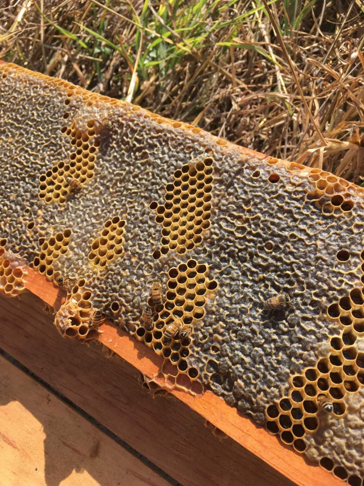 Beekeeping Experience   Apicultura Mx