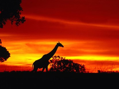 Atardecer en Kenya_viajes de novios_Viajes Nieto KENYA