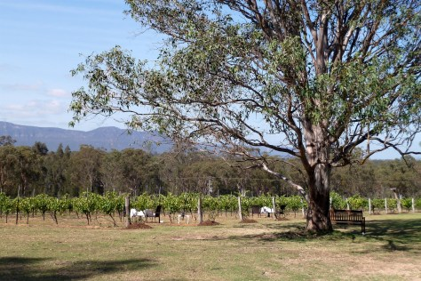 Spicers Vineyards breakfast