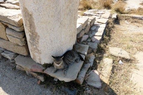 Delos cat