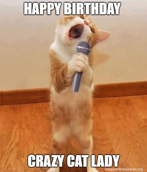 31 Funniest Cat Birthday Meme Birthday Meme