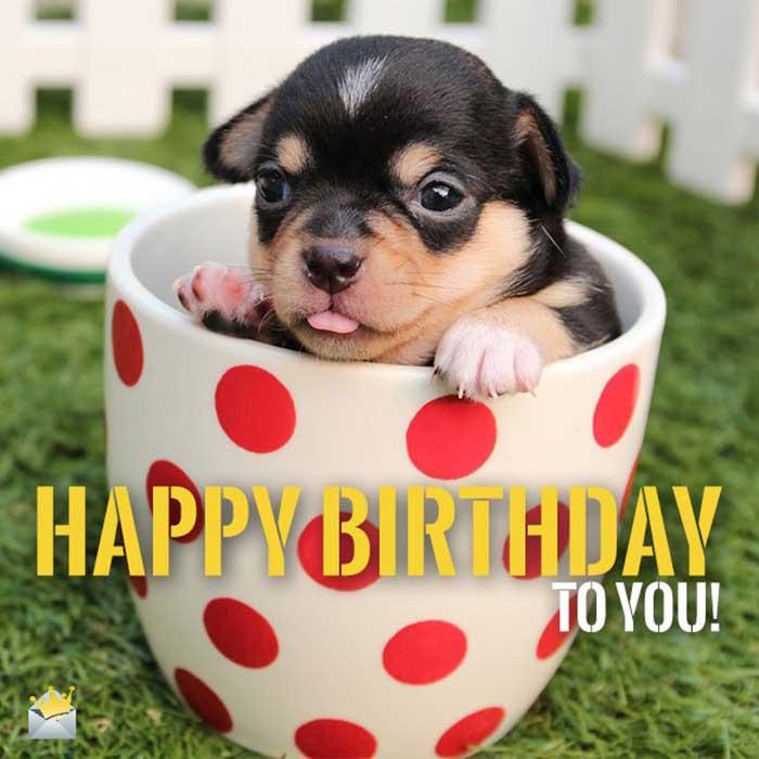 29 Funniest Happy Birthday Dog Meme Happy Birthday Meme