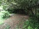garden26may (4)
