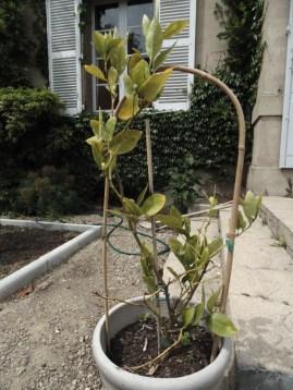 garden26may (6)