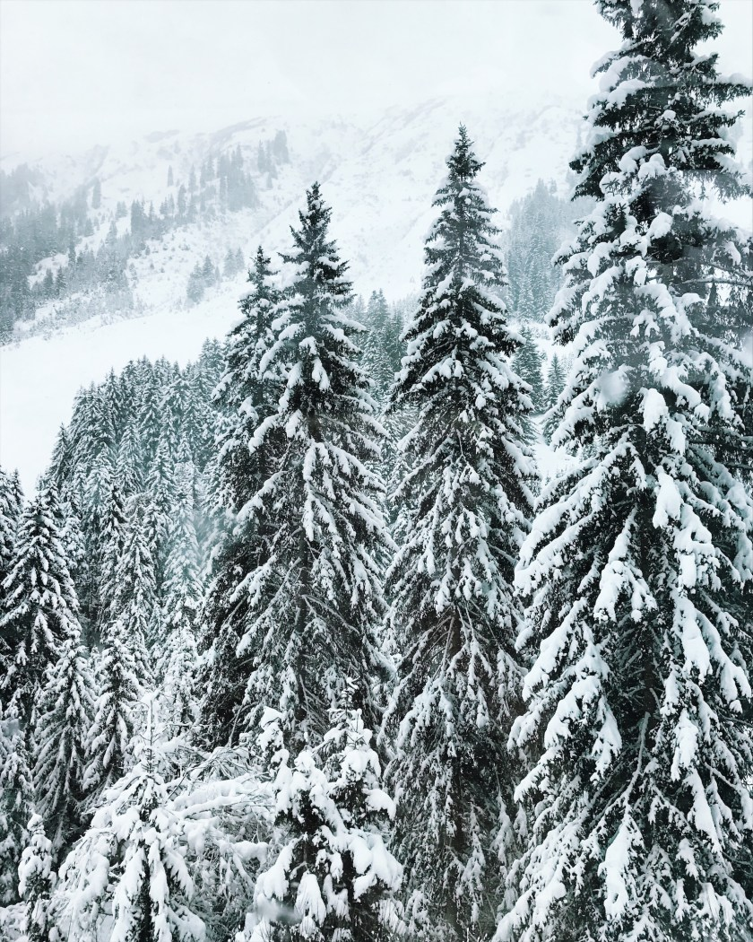 Snowcovered trees in the Swiss Alps