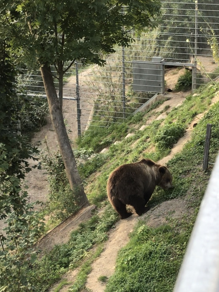 Watching bears at the Bear Park in Bern, Switzerland