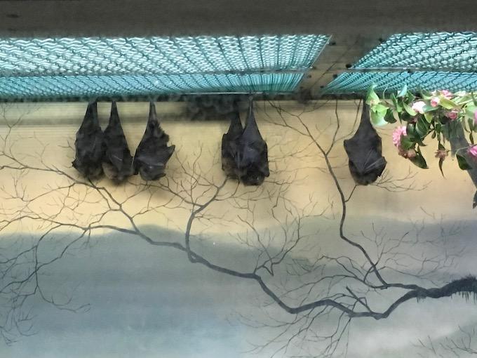 image of sleeping bats