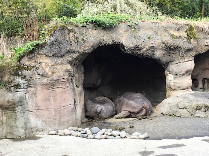 image of sleeping tortoises