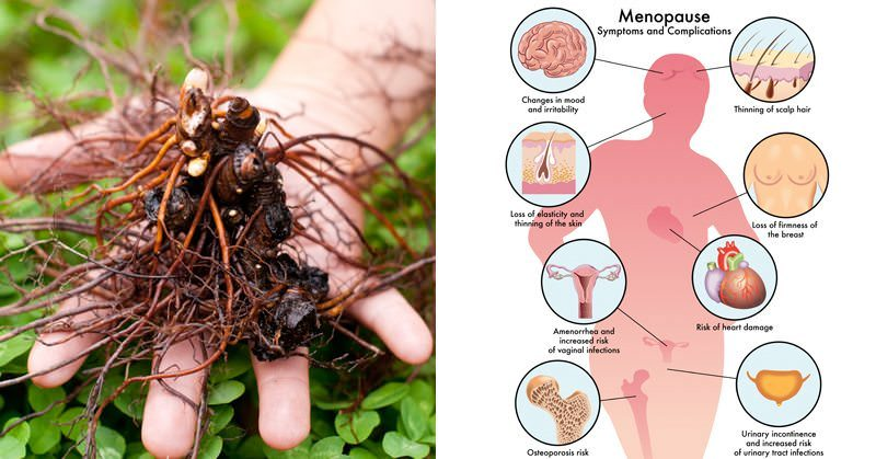 2 Herbs to Relieve Hot Flashes, Night Sweats, and Anxiety