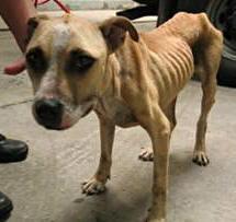 cruelty_dog