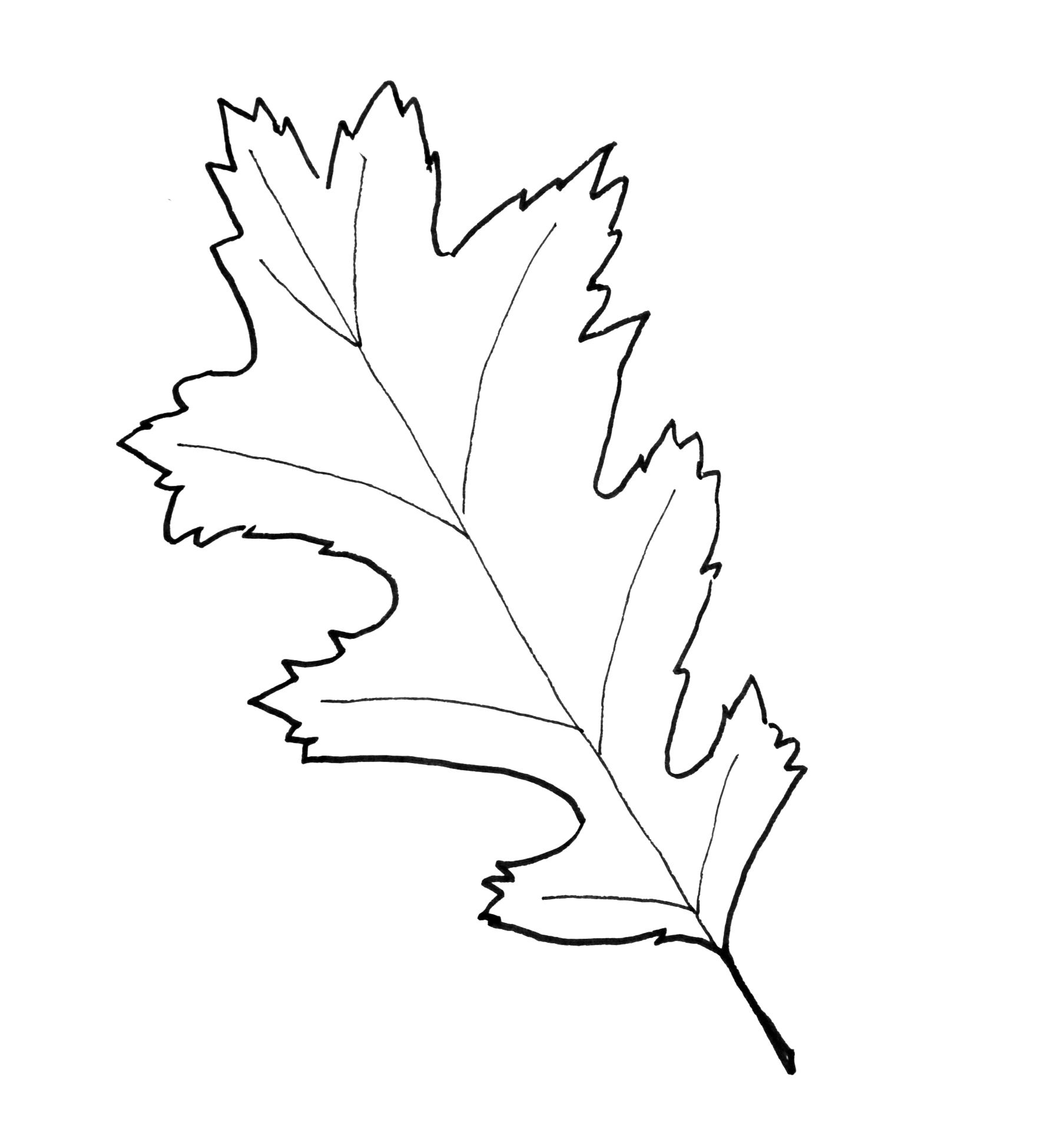 Leaf Patterns Fall Leaves And Printables