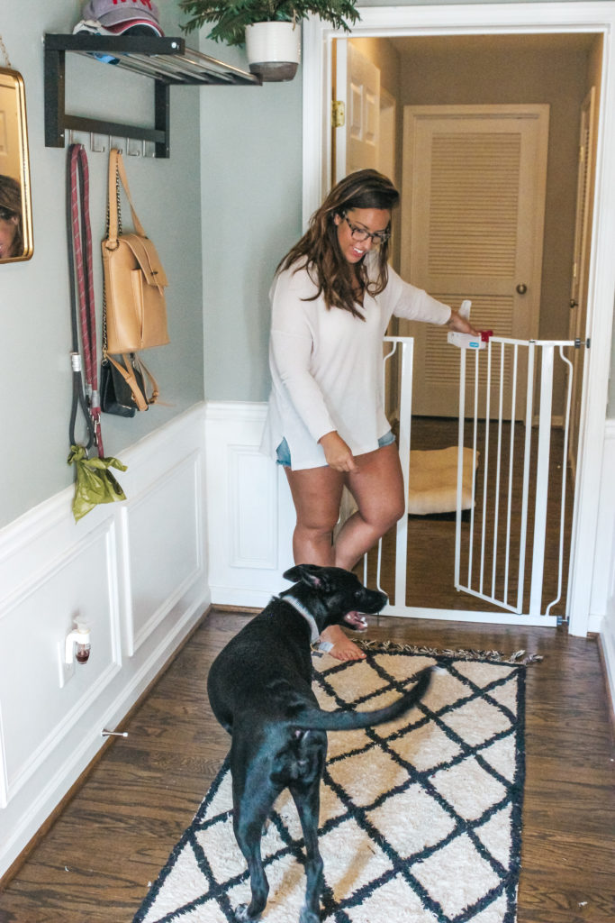 Keep Your Home and Pets Safe | Just Peachy Blog