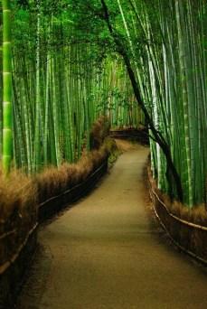 Bamboo Forest   Sagano (Pinterest)