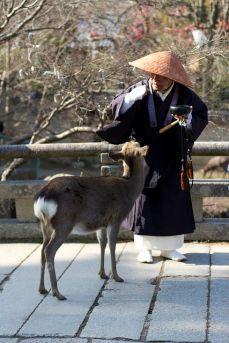 I cervi di Nara (Pinterest)