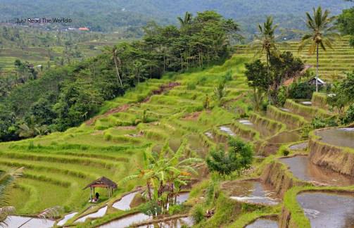 Le bellissime risaie di Jatiluwih a Bali