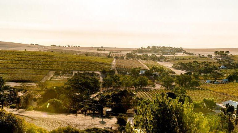Seppeltsfield-Barossa-landscape-feature