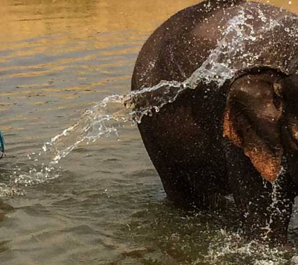 Thailand-Elephant-feature