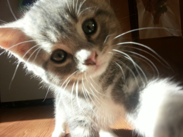 Image result for cute animals