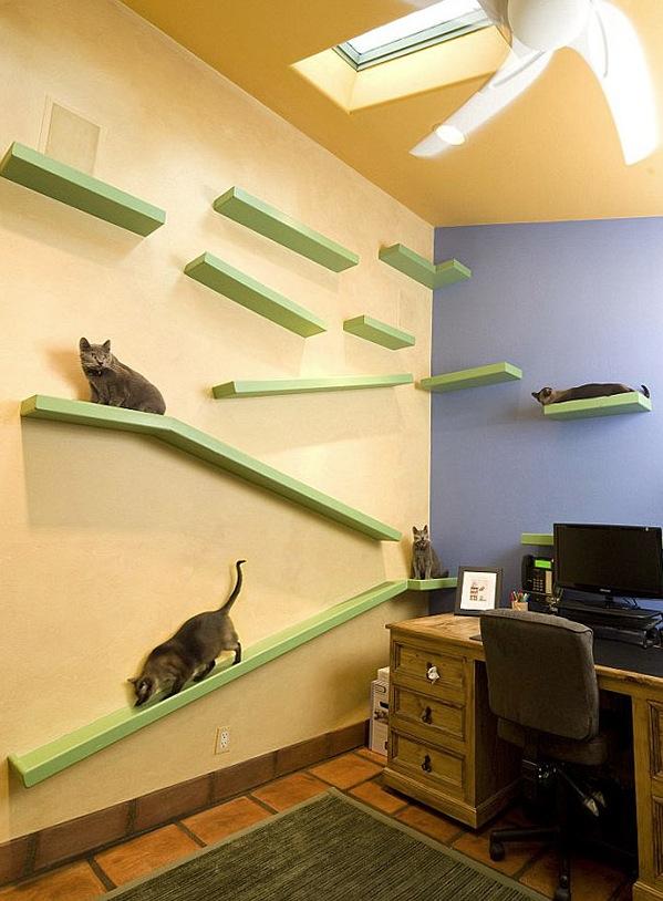cat-friendly-house-2