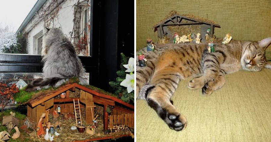 24 Times Cats Crashed Nativity Scenes And Didnt Give A Fur