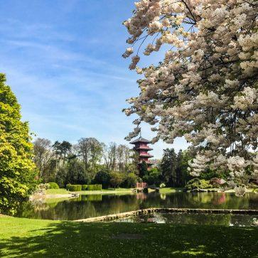 Japanese Garden - Brussels