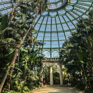 greenhouse interior - brussels