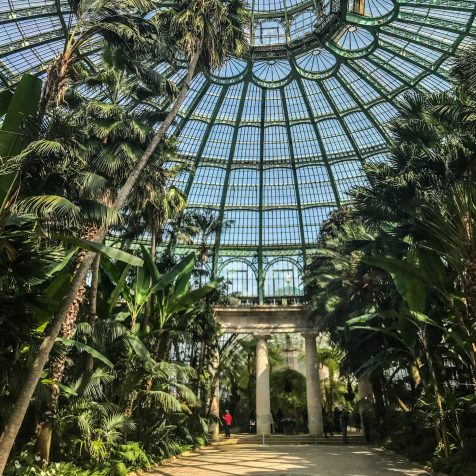 greenhouse interior - brussels