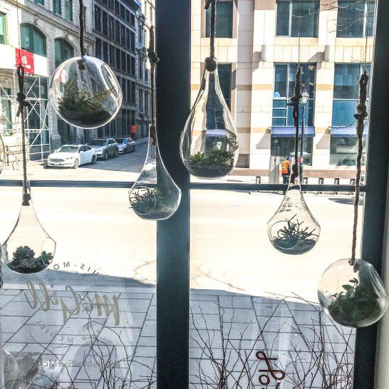 LOV Restaurant - McGill - Montreal - Hanging Succulents