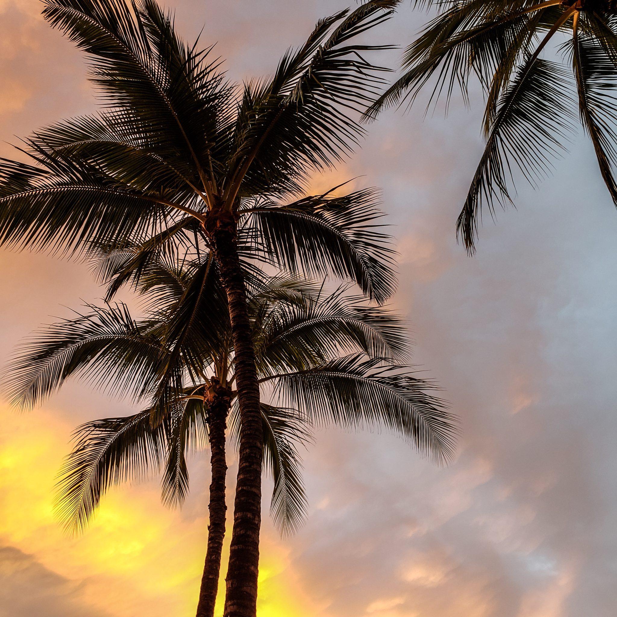 Beach - Hawaii - Oahu - Honolulu - Waikiki