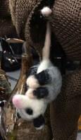 OpossumIMG_3621