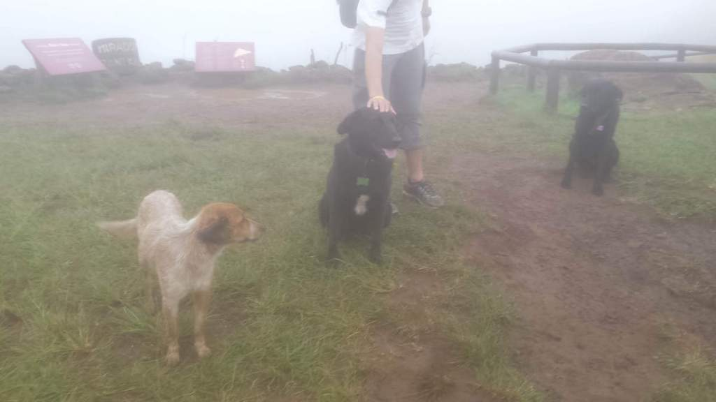Three dogs who joined us for a hike, Easter Island