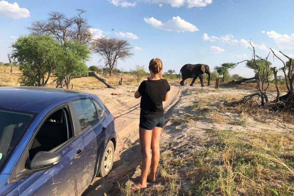 Elephant strolling in the distance with broken down car in front