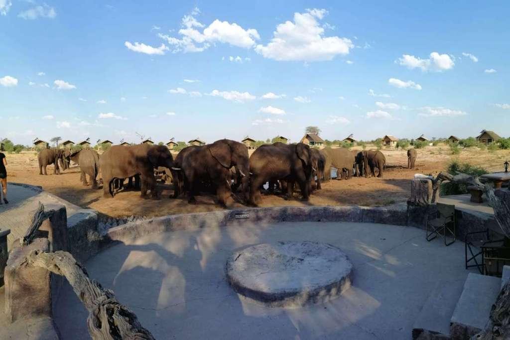 Elephants seen from Elephant Sands campsite