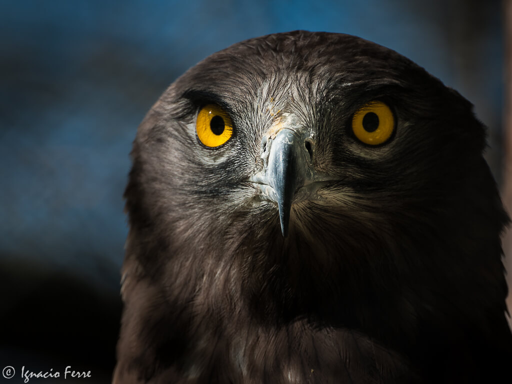 Read more about the article Searching for an eagle in Malta